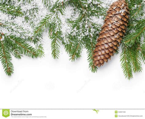 border from fir twigs cone and fake snow stock image