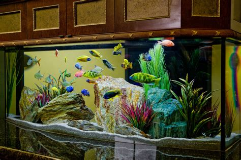 cool aquariums   home
