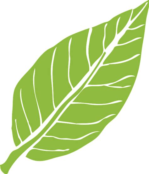 leaf pattern png free vector graphic leaf nature green plant natural