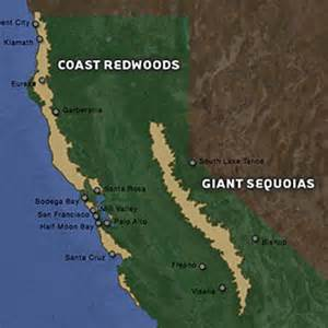 understanding redwood history and biology