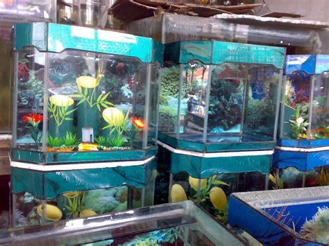 desain aquarium ikan koki pusat aquarium dan ikan hias model aquarium hiasan