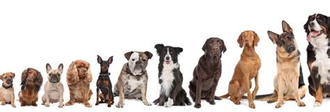 how to get your to mate with you how to choose a breed pet uk