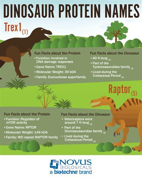 protein names dinosaur protein names infographic novus biologicals