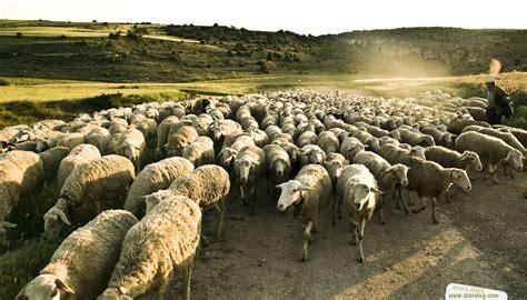 imagenes de los pastores en el nacimiento de jesus no traiciones tu llamado