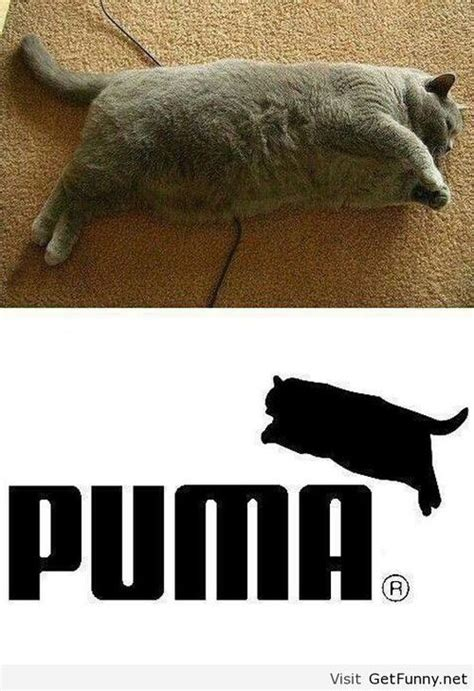 Puma Meme - new puma logo with a fat cat funny pictures funny