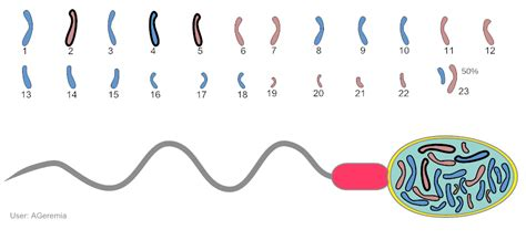 AIPMT-CBSE Y Chromosome Sperm