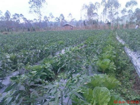 Pupuk Yang Mengandung Boron Tinggi pupuk klinik pertanian organik