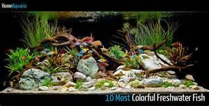 Betta Aquascape 10 Most Colorful Freshwater Fish Home Aquaria