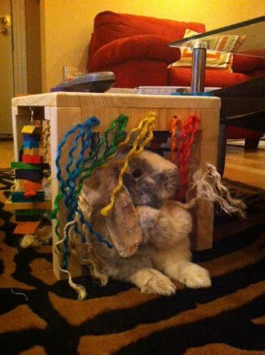 original activity zone rabbit toy buy   uae