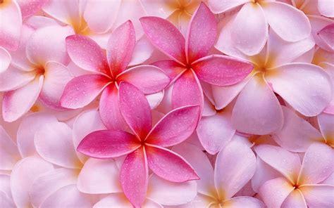 fiori sfondo sfondi fiori 63 immagini