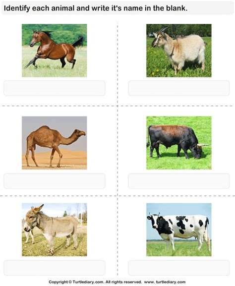 cattle names names of cattle worksheet turtle diary