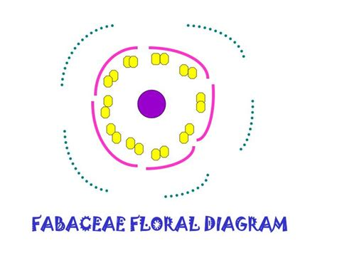 floral diagram of fabaceae family ppt fabaceae bean or pea family powerpoint presentation