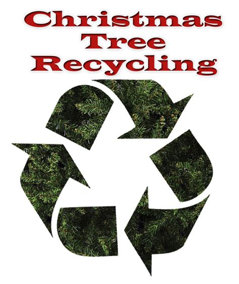 county urges christmas tree recycling jackson hole media