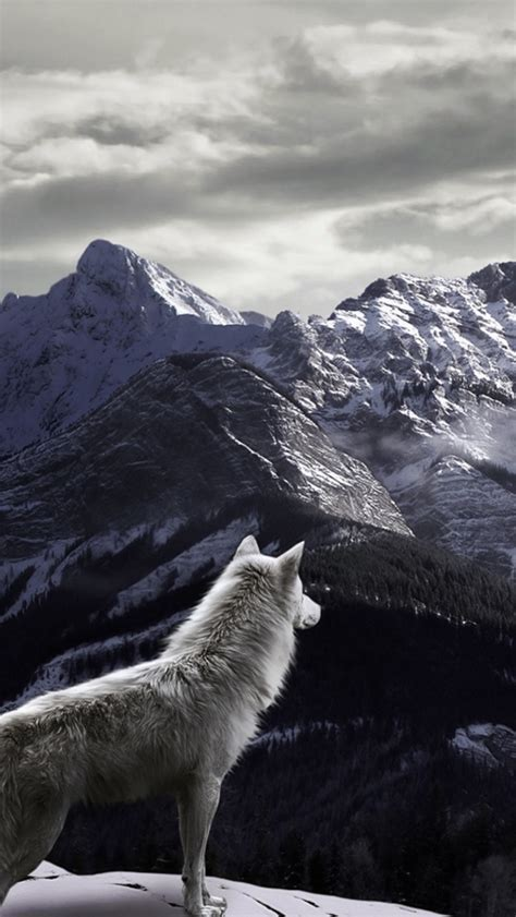 wallpaper iphone 5 wolf white wolf in mountains wallpaper for iphone 5