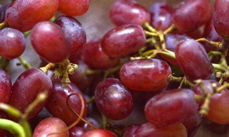 grapes poisonous to dogs grapes poisonous to dogs archives the dogington post