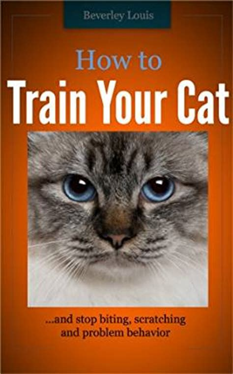 how to stop your cat from scratching your couch how to train your cat and stop biting scratching and