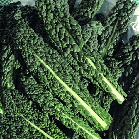 Nero di Toscano Cavolo Nero (Black Kale)   Rocket Gardens