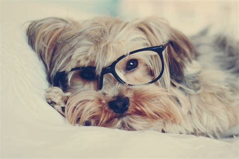 imagenes hipster tumblr animales animales hipster jellyfish