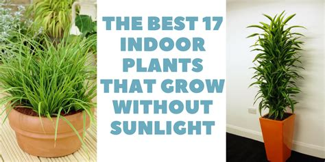 17 plants that grow well indoors without sunlight the best 17 indoor plants that grow without sunlight