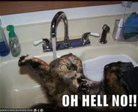 Oh Hell No Meme - funny cat memes archives page 980 of 983 cat planet