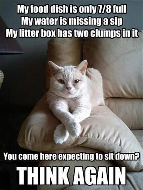 Funny Asshole Memes - caturday 2014 cute cat gifs funny kitten pics