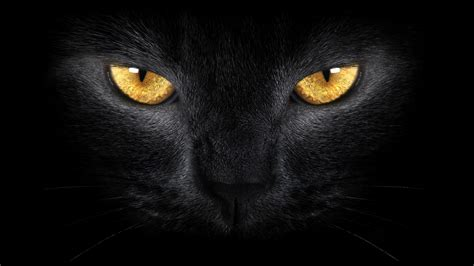 wallpaper chat black fond ecran hd animal chat noir regard dor 233 wallpaper black
