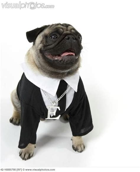 pug tie clip suit and tie pug pugs pugs you gotta em pug suits and suit
