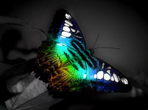 wallpaper free butterfly download free wallpaper wallpapers for mac wallpapers for