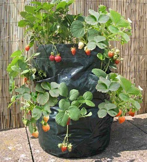 Harga Planter Bag 2017 strawberry planter bag 8 kantong jual tanaman hias