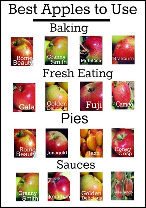 best apples for baking and cooking roses and gardens