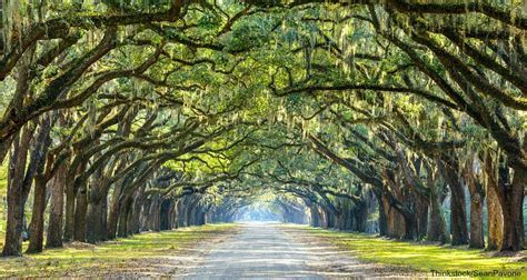 7 of the Most Beautiful Parks and Squares in Savannah, GA