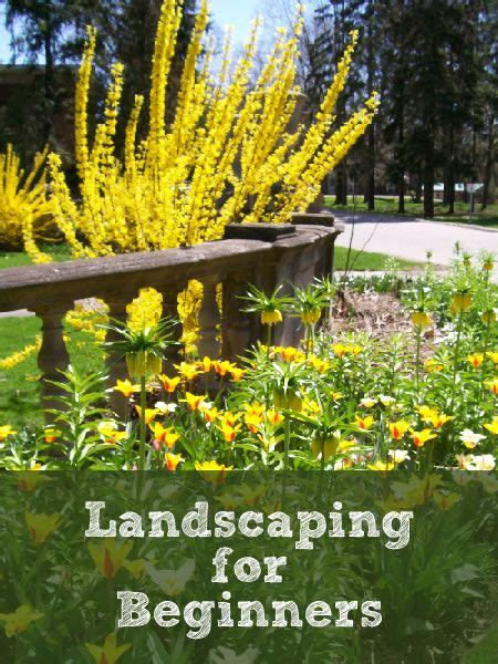 Gardening Ideas For Beginners 9 Best Images About Gardening On Pinterest Gardens Raised Beds And Raised Bed Gardens