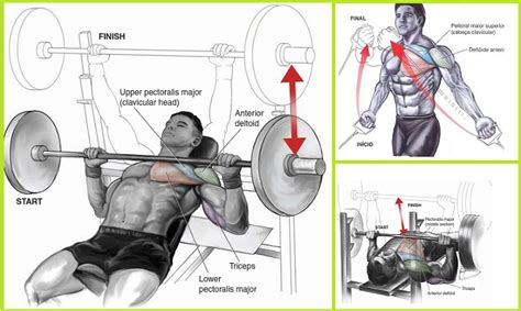 best bench press workout for mass bench press routine for mass 28 images 25 best ideas