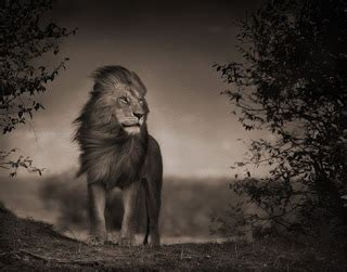 Ŧhe ₵oincidental Ðandy: the poetic photography of nick brandt