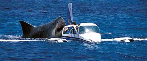 fishing boat attacked by shark megalodon california surfer pronounced dead after shark attack