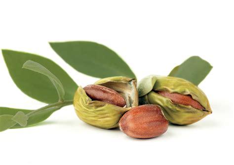 Sweet Almond Now Foods 118ml now organic jojoba 118ml babyonline