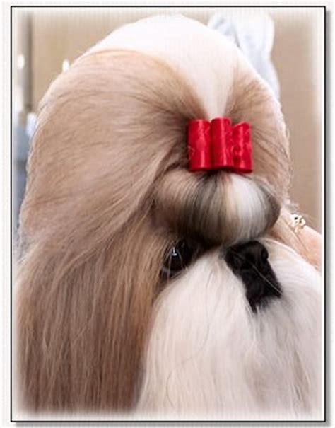 hashanah shih tzu bows by doggie bow ties specialty satins show bows