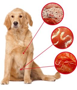 puppy has worms in 5 symptoms of worms in dogs how to check if your has worms