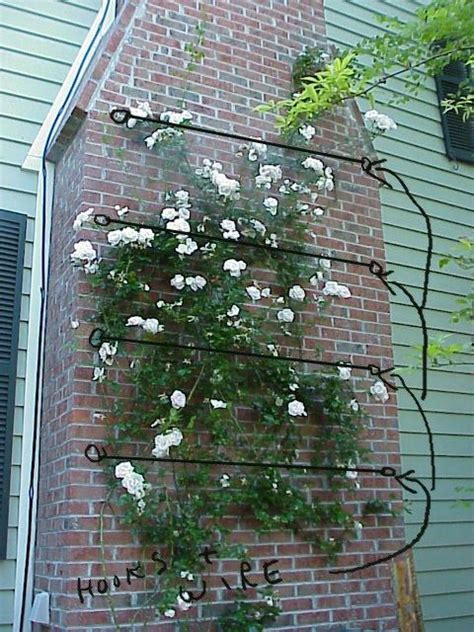 ideas for climbing rose supports galvanized wire supports between eye bolts to support climbing on brick wall garden