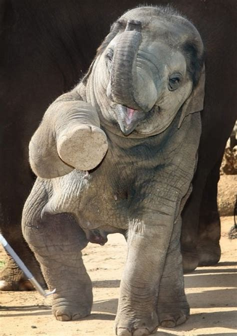 beautiful pictures  baby elephant