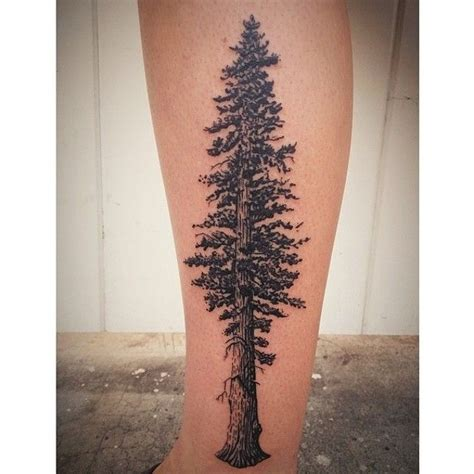 redwood tree tattoo 1000 images about on california
