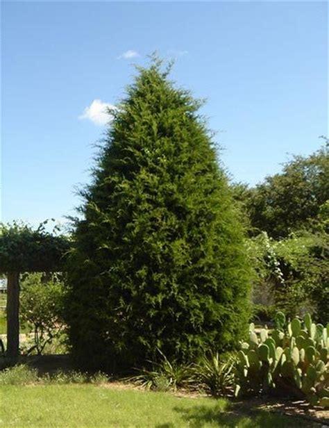 cedar trees eastern cedar treeland nursery dallas