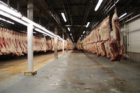 cuts in greeley colorado forget the robots meat processing is still a human s job