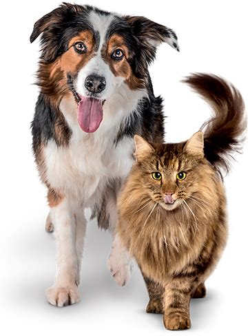 premium cat and dog dry food | perfect fit™