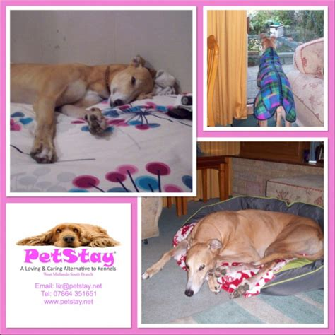 Small Dogs Free To Home West Midlands Photos For Petstay West Midlands South Home Boarding