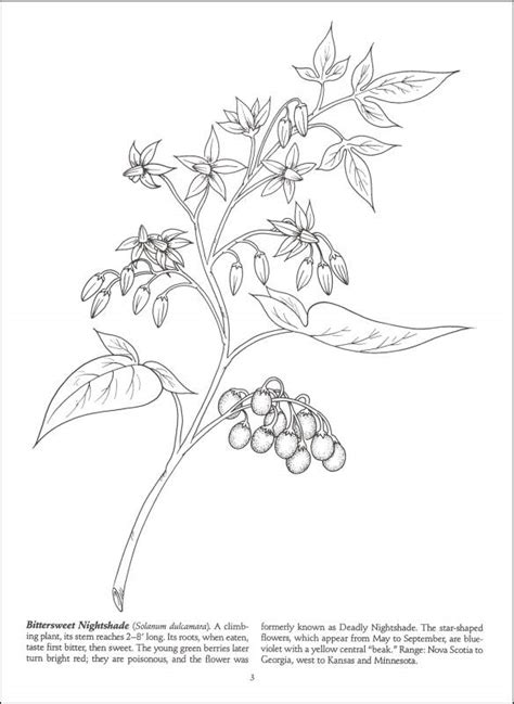 coloring pages of wild flowers wildflower line drawings