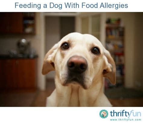 food for dogs with allergies feeding a with food allergies thriftyfun