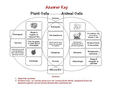 Animal And Plant Cells Worksheet Answers by All Worksheets 187 Cell Worksheets Printable Worksheets