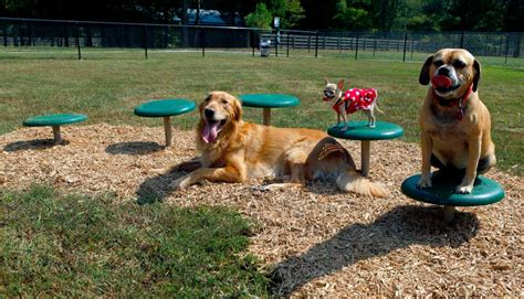 how to build a dog park in your backyard petition 183 jaclyn symes build a dog park in wallan