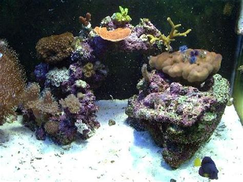 Live Rock Aquascape Designs by Simple And Effective Guide On Reef Aquascaping Reef